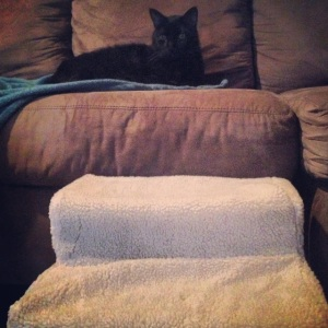 Oliver's special mini-stairs! He loooves to spend time on the couch with his foster mom, Diane.